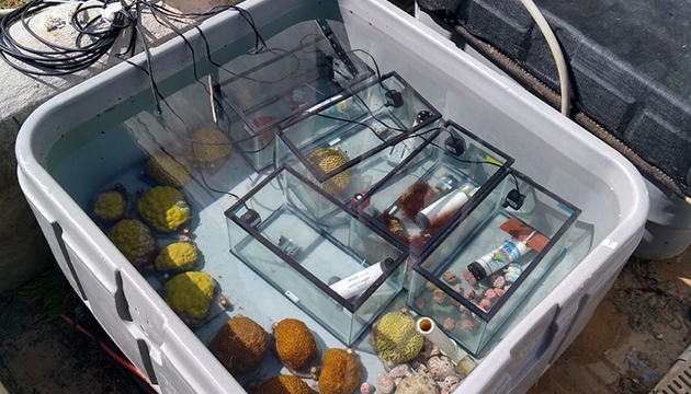 <p> 1.7Outdoor incubations of corals and algae measuring photosynthesis rates. Daytime respiration rates were measured as well, by darkening the chambers for 20 minutes every 2 hours. Photo: Charlie Schneider.</p>