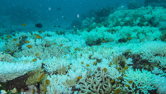 <p>2.1 Coral bleaching in Thailand in 2010. Photo: Marlene Wall (GEOMAR, Kiel)</p>