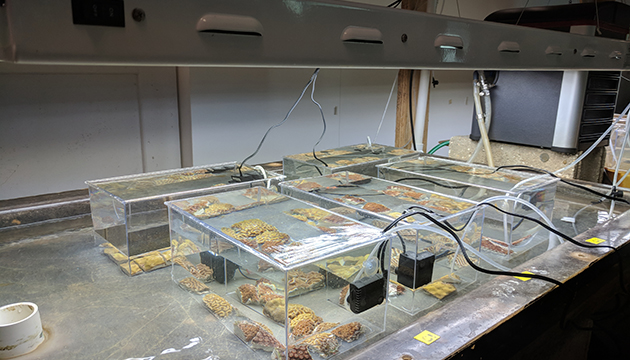 <p> 	2.3 Partial setup of the artificial upwelling experiment. Photo: Moronke Harris</p>