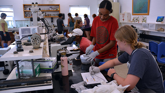 <p> Students on the Coral Reef Ecology course separate coral tissue from the skeleton to assess physiological changes during laboratory experiments.</p>