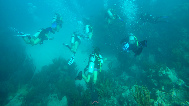 <p> Students on the Coral Reef Ecology course perform video surveys, fish counts and macroalgae collections. Along with associated lab work, students study the benthic community structure of reefs in Bermuda.</p>