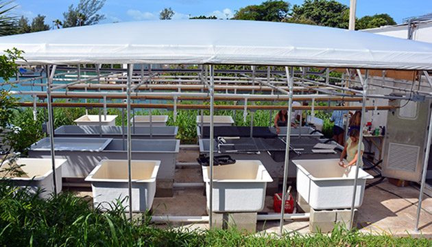 <p>The mesocosm facility has 4 large flumes in the center and 8 square aquaria around the sides. The air-conditioned trailer is pictured on the right-hand side and supports the 2 large header tanks. The scaffolding provides a structure for the piping and a shade cover.</p>