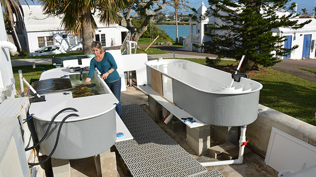 <p> 	Sawall at the BIOS flume facility measuring reef community metabolic rates, namely photosynthesis, respiration and calcification. The flumes were built to determine light-use-efficiencies of different community types (e.g., coral, macroalgae, endolithic algae inhabiting sand) as part of the NASA <a href=