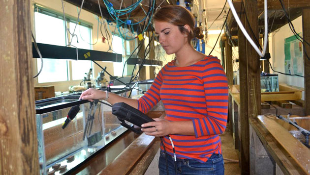 <p> 	REU student taking samples in the lab.</p>