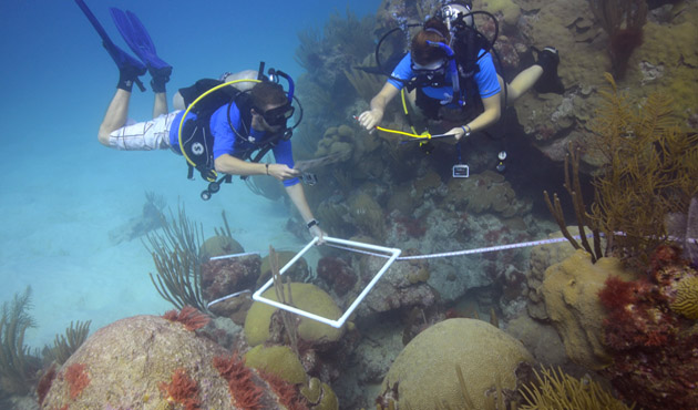 <p> 	Ryan Woods and Whitney Jailley use a transect and photoquad to identify marine invertebrates on the North East Breakers reef.</p>