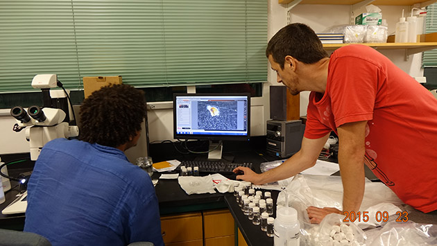<p> Marine Plankton Ecology students examine taxonomy, functional diversity and the roles that plankton play in marine food webs.</p>
