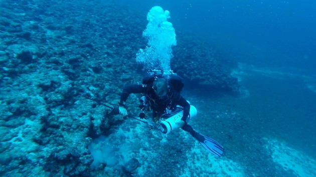 <p> 	Alex Chequer, part of the Technical Diving Team, captures a lionfish at depth and puts it in a specialized containment unit.</p>