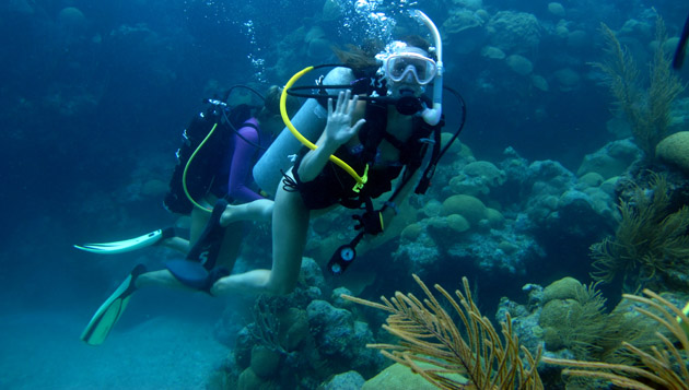 <p> 	Gaining dive experience on Bermuda's reefs as an intern. </p>