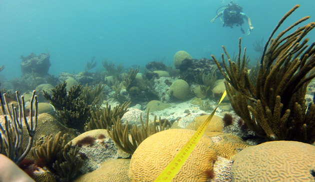 <p> 	Underwater research to investigate the health of marine ecosystems.</p>
