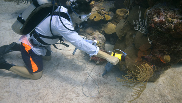 <p> 	Taking spectrometer readings on the corals of Hogbreaker Reef.</p>