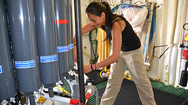 <p>SESO intern collects seawater samples.</p>