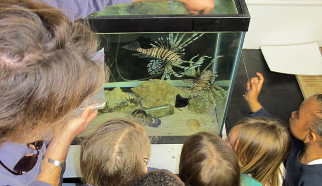 <p> 	Local primary students learning more about the lionfish with BIOS research specialist, Tim Noyes.</p>