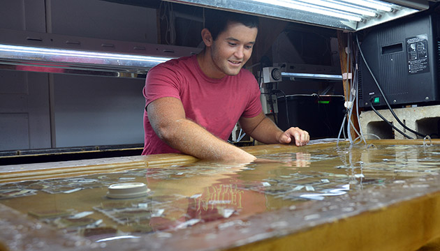 <p> 	Alex Lundburg, an intern from the University of South Florida College of Marine Science, helps prepare a new experiment in the coral lab.&nbsp;</p>