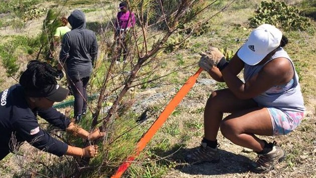 <p> 	Raleigh participants remove invasive trees from Ferry Point Park.</p>